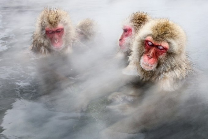 """<p class=""""Normal""""> <span lang=""""vi"""" xml:lang=""""vi""""><span>Loài khỉ tuyết ở vùng núi Jigokudani, tỉnh Nagano, Nhật thường ngâm mình trong các suối nước nóng để tránh rét. Chúng lim dim mắt và tận hưởng cảm giác thư giãn như ở spa hay bể jaccuzi thứ thiệt.</span></span><span>Ảnh:</span><em>Washington Post.</em></p> <p class=""""Normal""""> Các loài máu nóng như chim hay động vật có vú cần duy trì nhiệt độ cơ thể ở mức vừa phải. Trong khi đó, các loài máu lạnh lấy nhiệt từ môi trường bên ngoài, nhiệt độ cơ thể chúng dao động, phụ thuộc vào nhiệt độ bên ngoài.</p> <p class=""""Normal""""> <span class=""""hps""""><span lang=""""vi"""" xml:lang=""""vi"""">Theo <i>ACS</i>, trong hầu hết các</span></span><span lang=""""vi"""" xml:lang=""""vi""""> <span class=""""hps"""">trường hợp,</span> <span class=""""hps"""">kích thước và</span> <span class=""""hps"""">hình dạng</span> <span class=""""hps"""">của một sinh vật</span> <span class=""""hps"""">cho biết liệu</span> <span class=""""hps"""">nó</span> <span class=""""hps"""">sẽ có</span> <span class=""""hps"""">máu nóng hay</span> <span class=""""hps"""">máu lạnh</span>. Với các loài có kích thước<span class=""""hps""""> lớn</span> như voi, cá voi, nếu chúng làm nóng cơ thể to lớn bằng nhiệt độ bên ngoài thì <span class=""""hps"""">sẽ</span> mất nhiều thời gian. Điều này làm chậm khả năng thích ứng của cơ thể<span class=""""hps"""">.</span> D<span class=""""hps"""">o đó</span>, <span class=""""hps"""">gần như tất cả</span> <span class=""""hps"""">các động vật to</span> <span class=""""hps"""">lớn</span> <span class=""""hps"""">là loài máu nóng</span>.</span></p>"""