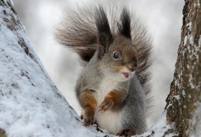 """<p class=""""Normal""""> <span>Một con sóc đang leo cây.<br /><br /> Nhiều loài động vật """"sống chậm"""" hơn vào mùa đông như rùa, gấu, nhím, sóc. Chúng ngủ hầu như suốt mùa đông trong cái tổ ấm áp của mình và sử dụng thức ăn đã tích trữ từ trước đó.</span></p>"""