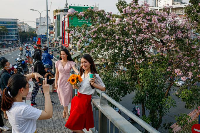 """<p> Những năm gần đây, hoa kèn hồng đã không còn xa lạ với người Sài Gòn. Nhiều người đã quen chờ đến dịp để ngắm và chụp hình lưu niệm với loài hoa này. Mọi năm, hoa trổ vào khoảng tháng 4 đến tháng 6, nhưng năm nay, do thời tiết ấm áp, hoa nở sớm hơn.</p> <p> Trên cầu Calmette (quận 1), nhiều bạn trẻ thích thú """"check in"""" với những cây hoa đang nở rộ.</p>"""