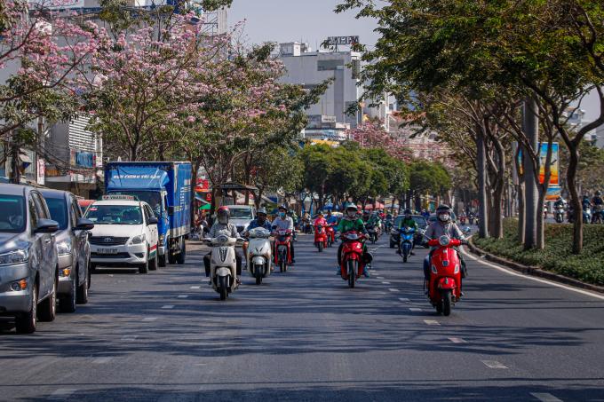 <p> Được trồng thử nghiệm tại TP HCM từ năm 2009, mùa hoa kèn hồng mang đến sắc màu tươi tắn giữa nhịp sống sôi động của thành phố.</p>