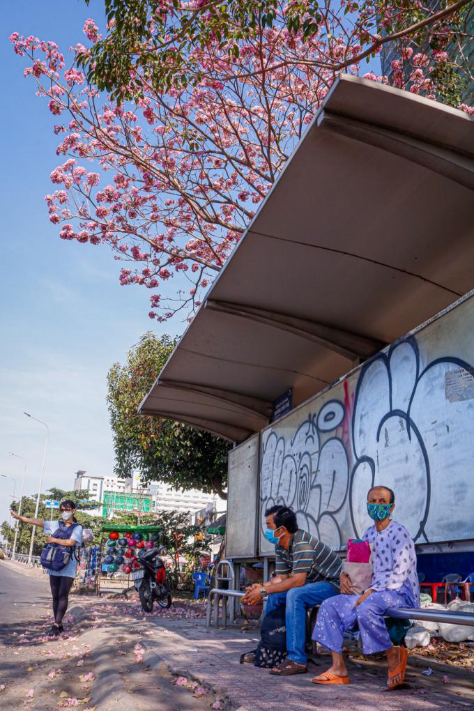 <p> Hoa tô điểm sắc hồng tại một trạm xe buýt trên đường Hàm Nghi (quận 1).</p>
