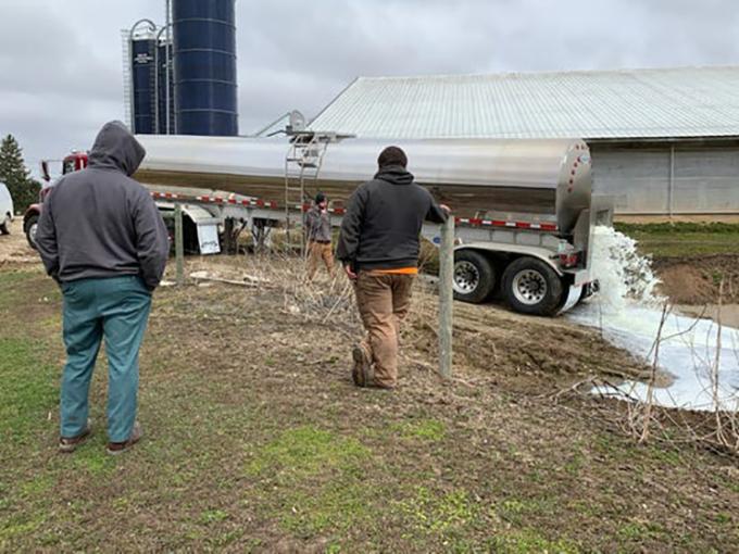 Hai bố con Ryan Elbe, chủ trang trại Golden E Dairy chăn nuôi 2.400 con bò sữa gần West Bend, thành phố phía nam bang Wisconsin, đứng nhìn xe tải đổ sữa ra đồng hôm 1/4. Trang trại đang đổ đi gần 95.000 lít sữa mỗi ngày. Ảnh: Golden E Dairy.