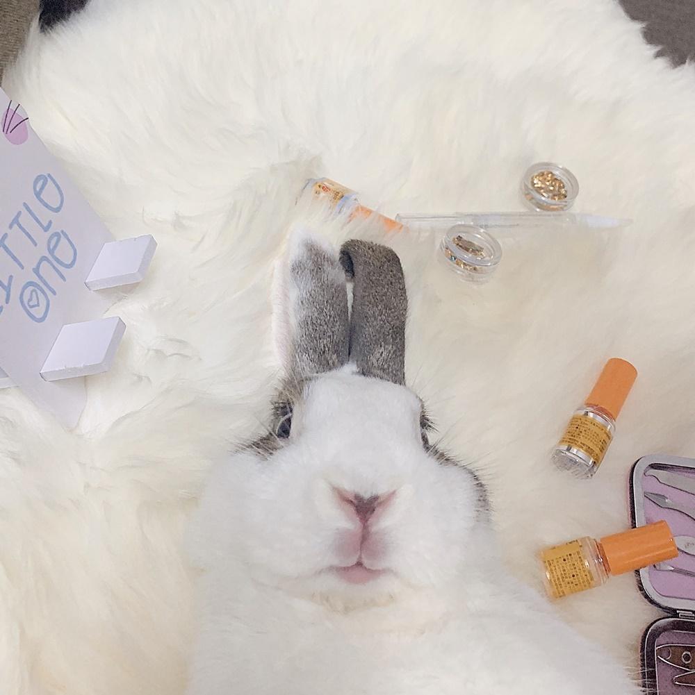 Thỏ Áp Chảo ăn hại  - 10