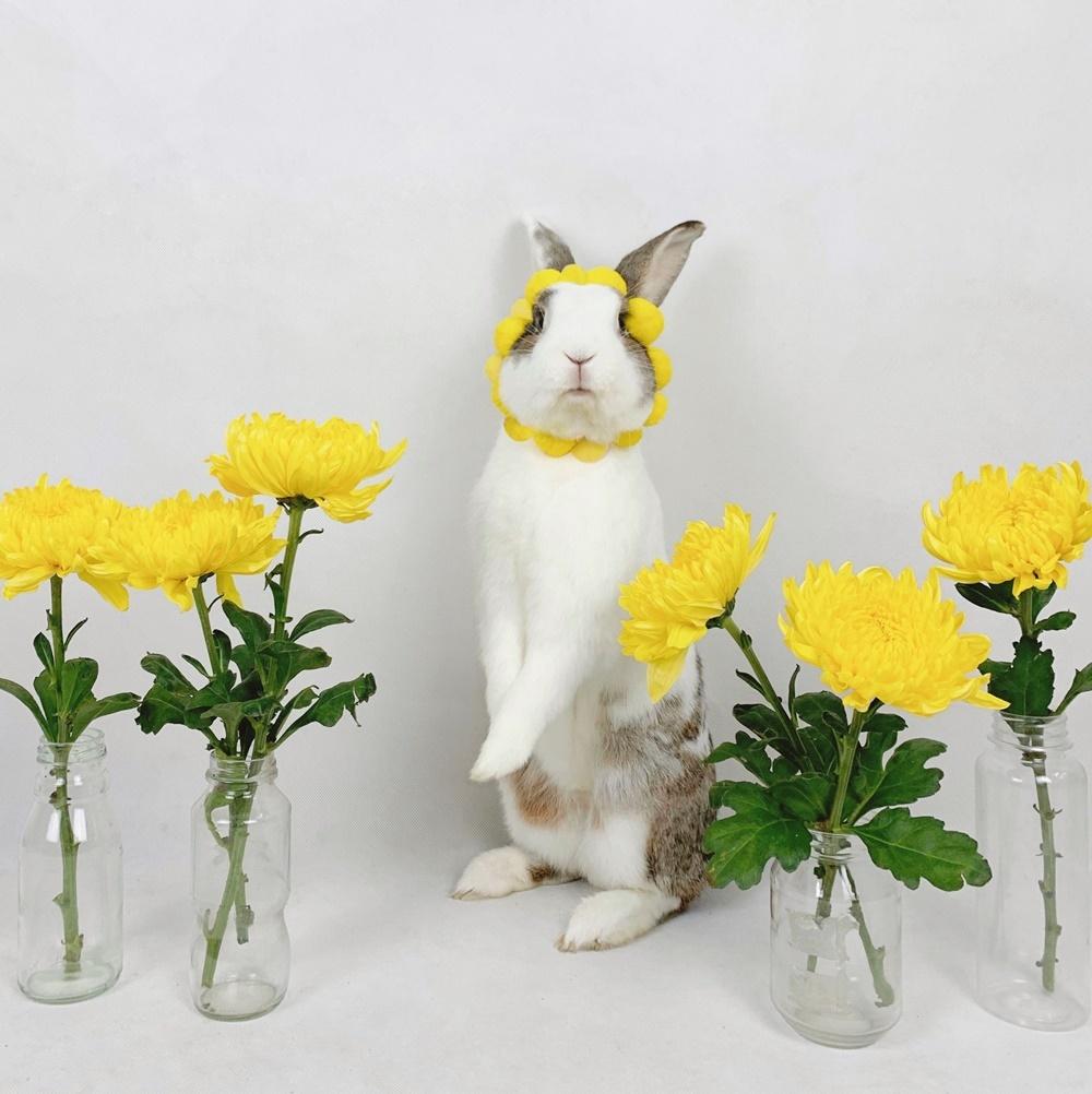 Thỏ Áp Chảo ăn hại  - 2