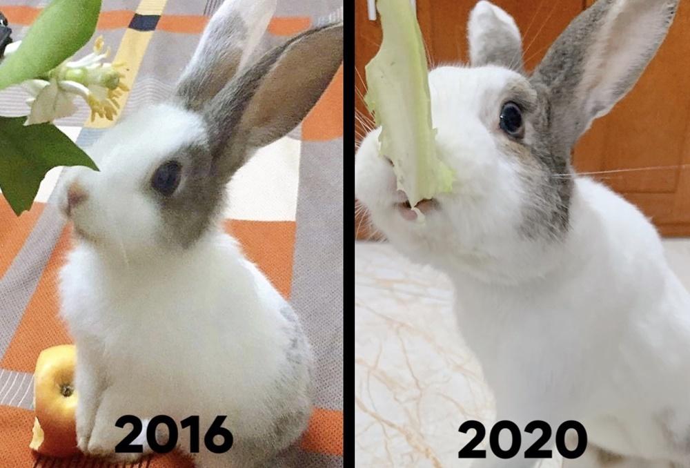 Thỏ Áp Chảo ăn hại