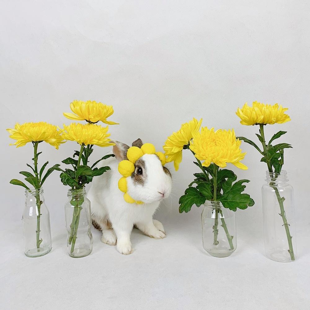Thỏ Áp Chảo ăn hại  - 4