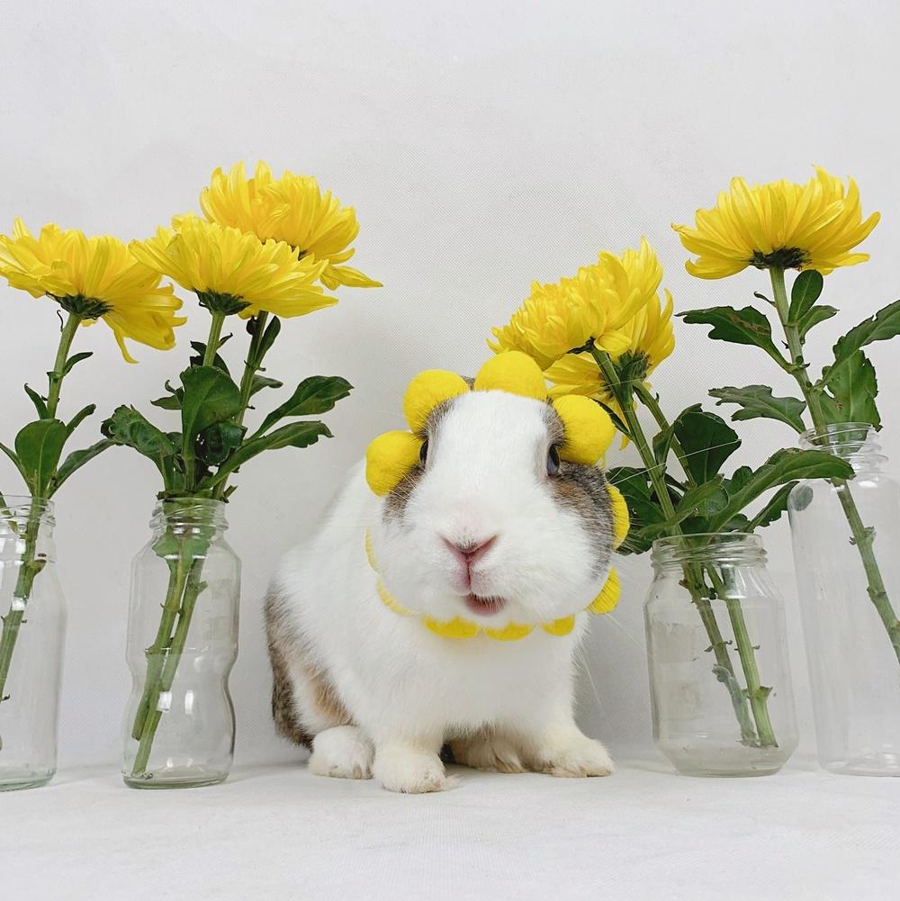 Thỏ Áp Chảo ăn hại  - 6