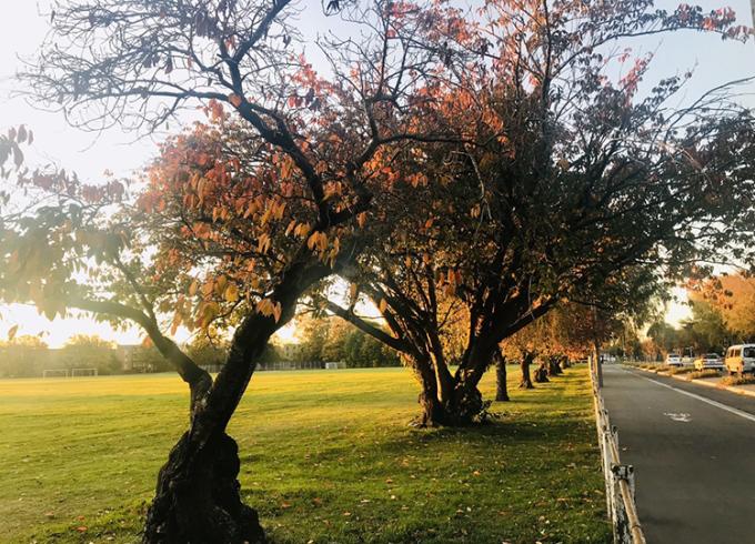Thời tiết mát mẻ và khung cảnh mùa thu xinh đẹp của New Zealand hiện tại rất phù hợp cho việc chạy bộ ở gần nhà hoặc trong khuôn viên trường.Ảnh: Vinh Tran Phuc.
