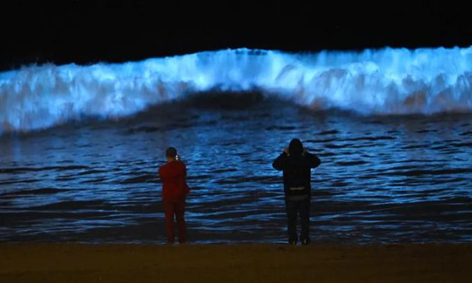 Hiện tượng phát quang sinh học thu hút nhiều người xem tại bờ biểnDockweiler. Ảnh:Mark J Terrill/AP.