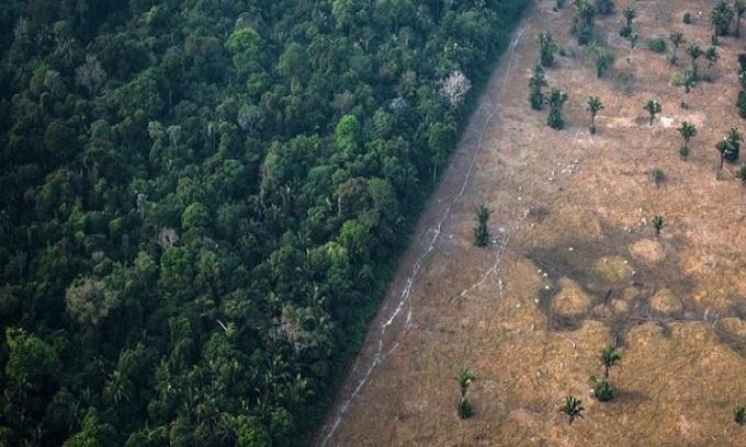 Rừng Amazon đang bị chặt phá với tốc độ đáng báo động. Ảnh: Bloomberg.