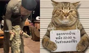 Mèo bị cảnh sát bắt vì vi phạm lệnh giới nghiêm