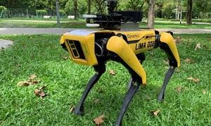 Chó robot tuần tra an toàn mùa dịch ở Singapore