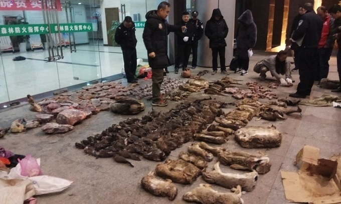Trung Quốc cấp tiền để dân bỏ buôn bán động vật hoang dã