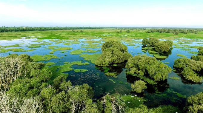 Vườn quốc gia Tràm Chim được trữ nước để phòng chống cháy. Ảnh: Quốc Trung