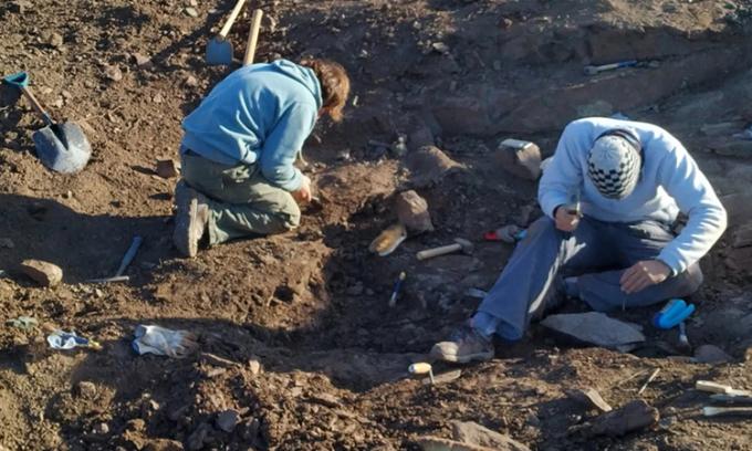 Các chuyên gia khai quật hóa thạch khủng long ăn thịttạiSanta Cruz ngày13/3. Ảnh: Reuters.