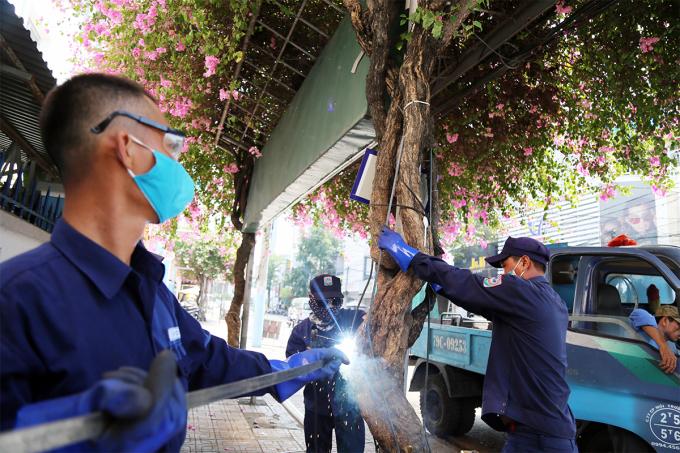Hơn 400 cây hoa giấy được bọc khung sắt chống trộm