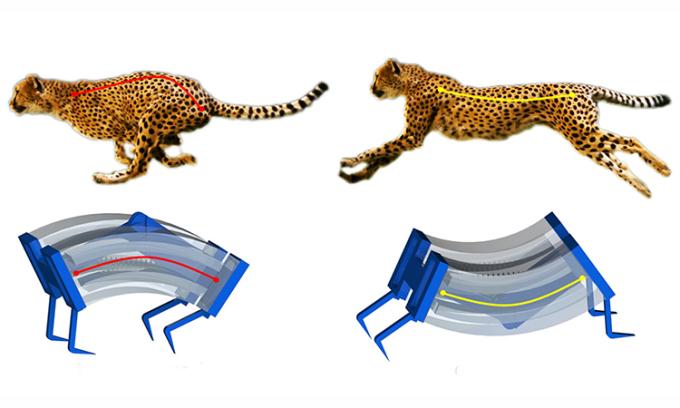 Thiết kế robot LEAP lấy cảm hứng từ báo săn. Ảnh: NCUS.