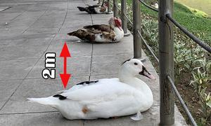 Động vật tuân thủ giữ khoảng cách trong mùa dịch Covid-19