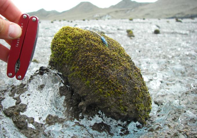 Khối cầu rêu hình quả trứng trên sông băng. Ảnh:Tim Bartholomaus.