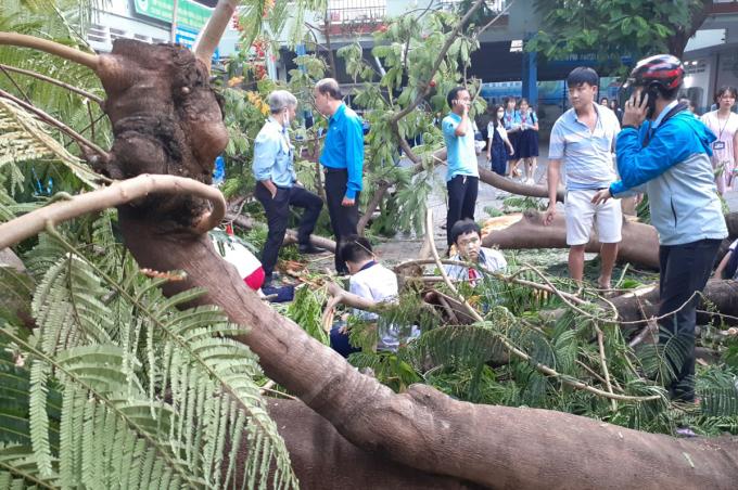 Hiện trường cây phượng đổ, đè học sinh sáng 26/5 tại trường THCS Bạch Đằng, quận 3. Ảnh: Trần Hồng Vũ.
