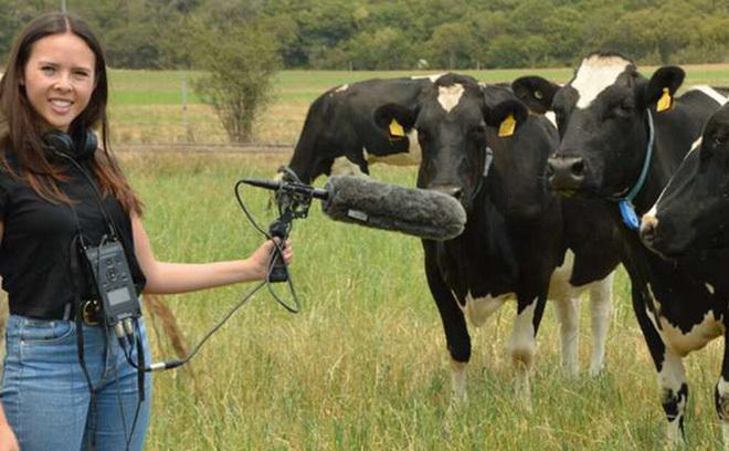 Đàn bò khiến cáp quang siêu nhanh của Google chập chờn - 2