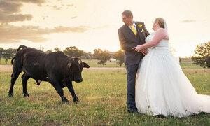 Trẻ trâu phá đám buổi chụp ảnh cưới