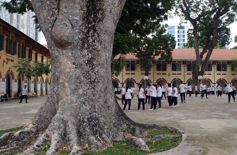 'Lỗ hổng' trong quản lý cây xanh trường học