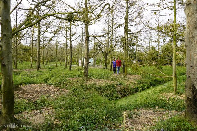 Vườn sầu riêng 3.500 m2 của ông Đoàn Văn Ham dù tốn 60 triệu tiền nước tưới, hiện vẫn chết hết. Ảnh: Hoàng Nam.