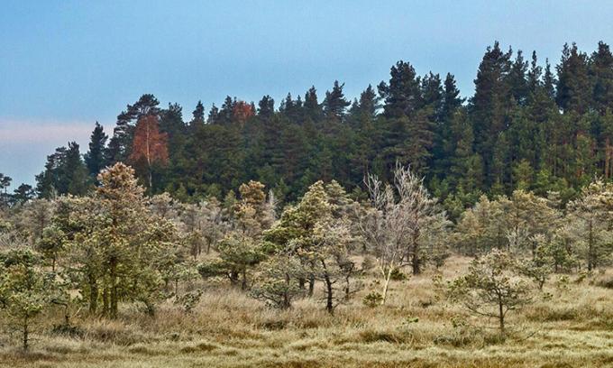 Độ tuổi và chiều cao trung bình của rừng đang giảm dần. Ảnh: SciTech Daily.