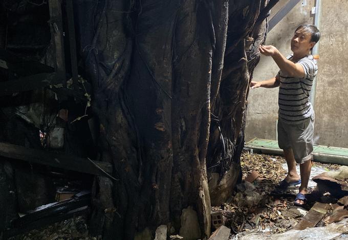 Gốc cây da phía bên trong nhà ông Hoàng Sa. Ảnh: Cửu Long