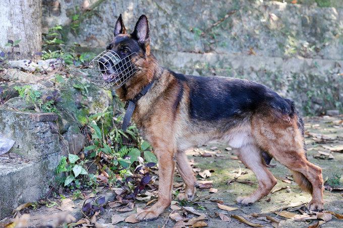 Chó nghiệp vụ đánh hơi ở hầu hết khu vực Sự lẩn trốn. Ảnh: Nguyễn Đông.