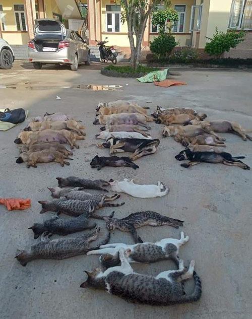 Cặp tình nhân dùng cyanua đánh bả chó mèo bị khởi tố