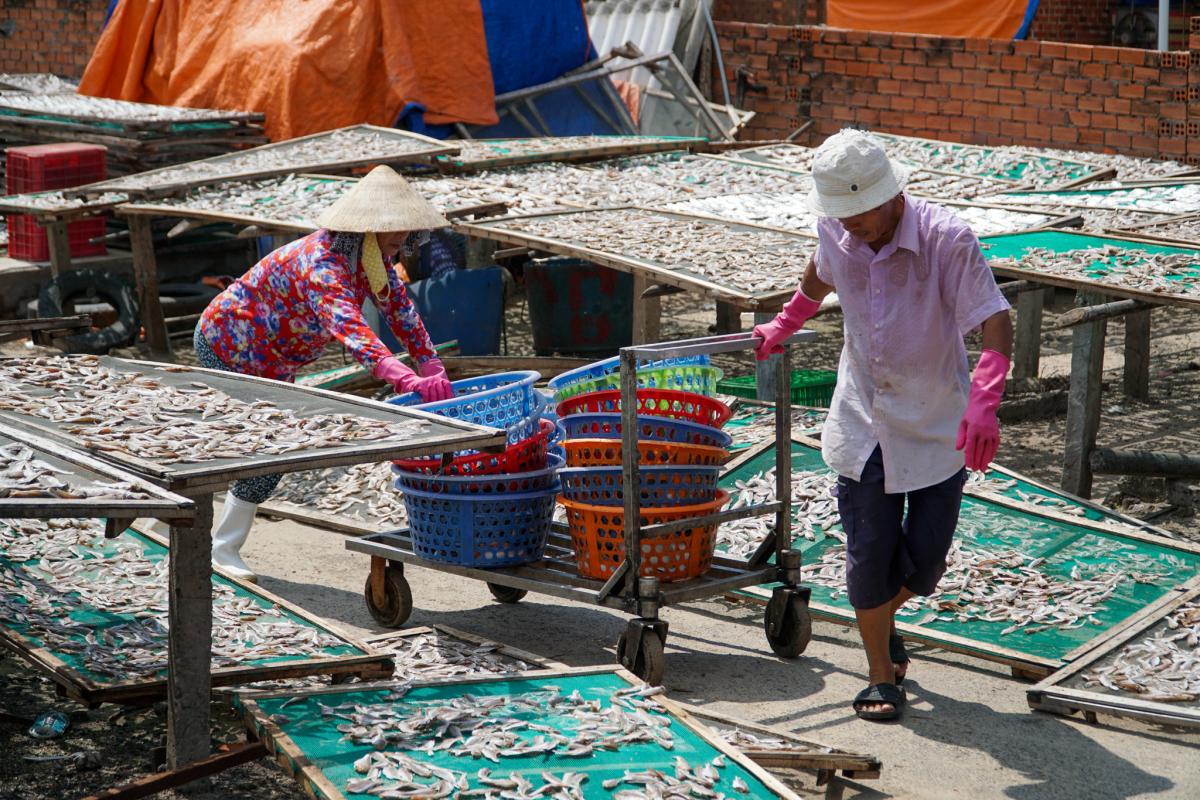 Làm cá khô ở làng biển
