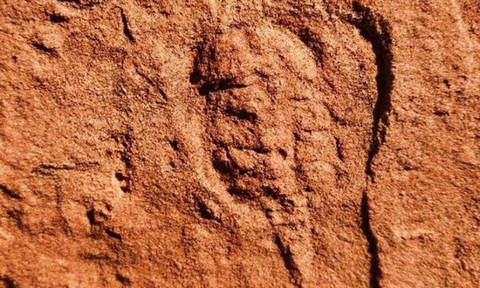 Hóa thạch động vật chân khớp 460 triệu năm tuổi. Ảnh: Daily Star.