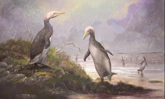 Hình ảnh phục dựng một loài Plotopteridae. Ảnh: Mark Witton.