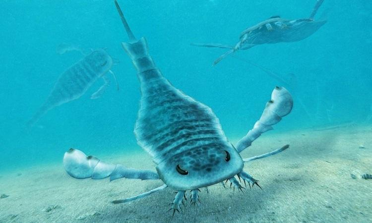 Bọ cạp biển khổng lồ thống trị đại dương tiền sử