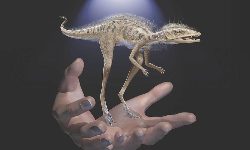 Phát hiện họ hàng tí hon của khủng long và dực long