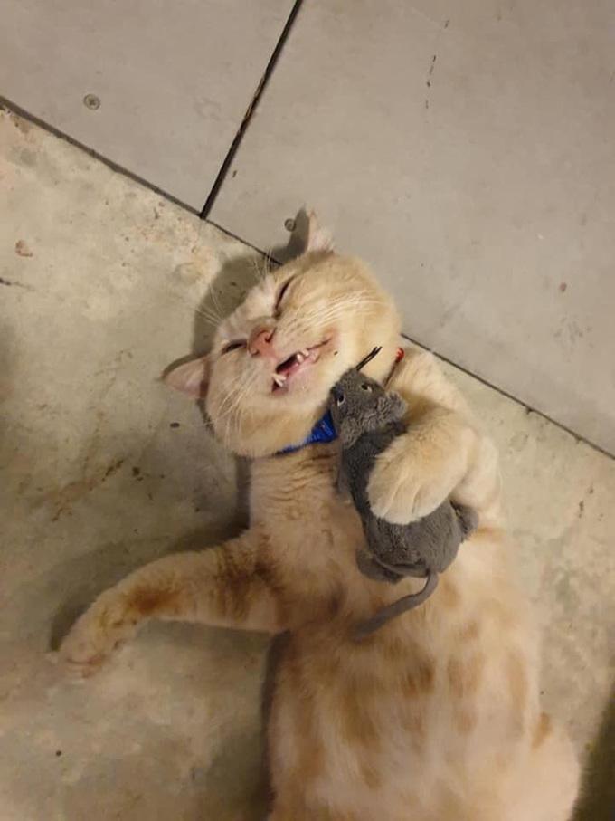 Mục đích anh chủ mua mèo về quán ăn vừa là để trông quán lại vừa để bắt chuột phá phách. Vậy mà mèo ta lại ôm chuột bông đi ngủ.