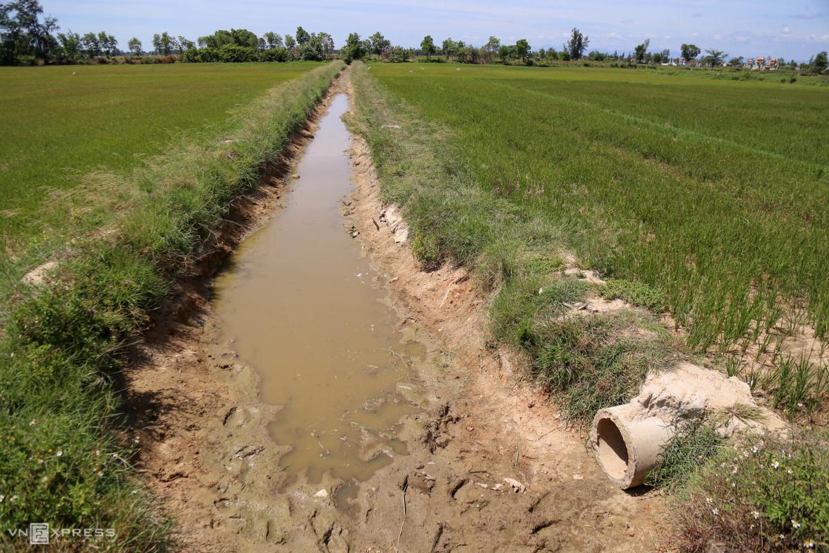 Nông dân bơm nước cứu lúa