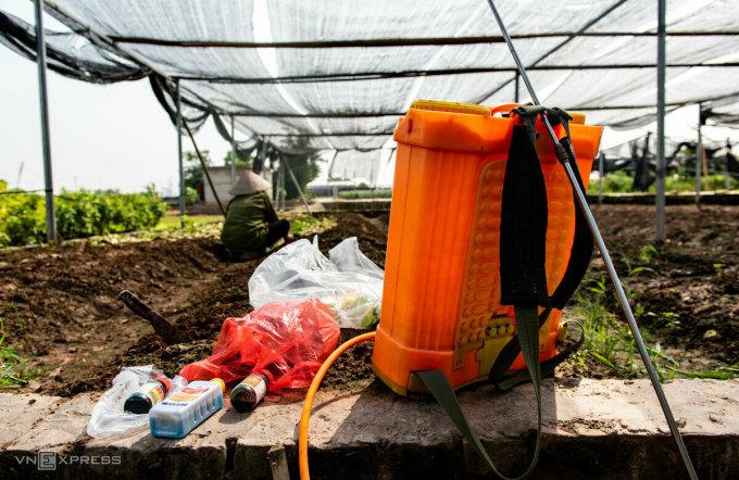 Bà Thêu làm đất, trừ cỏ trước khi trồng vụ xà lách mới. Ảnh: Thanh Huế.