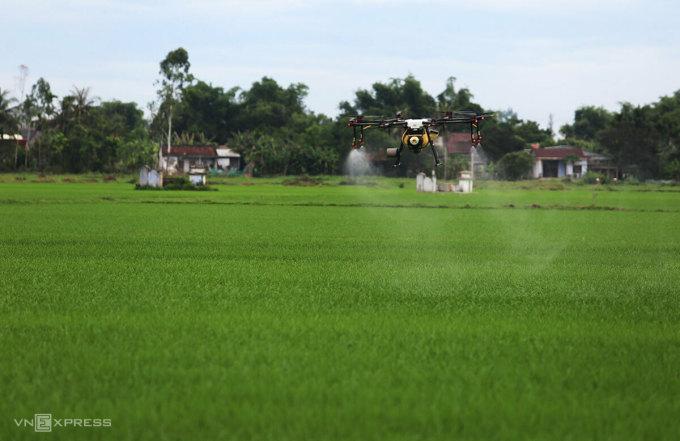 Một số nơi dùng thiết bị không người lái để phun thuốc trừ sâu trên diện rộng, ông Tùng cho rằng việc này phản khoa học không khác gì một người đau bụng bắt cả làng uống thuốc, bởi chất đất, chu kỳ sinh trưởng của cây trồng mỗi ruộng khác nhau. Ảnh: Đắc Thành.
