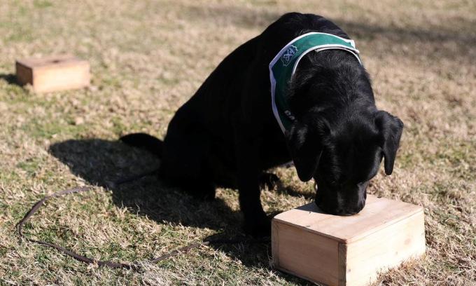 Chính quyền Chille: Huấn luyện chó đánh hơi nCoV