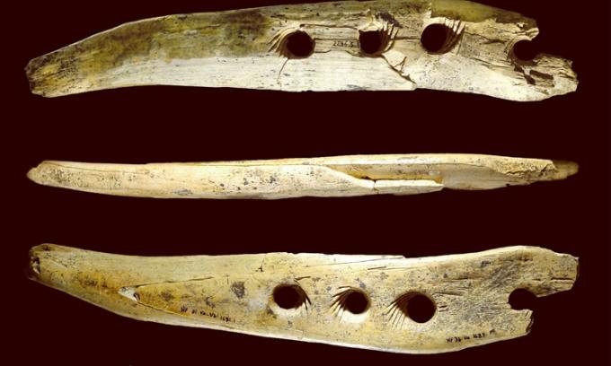 Công cụ bằng ngà voi ma mút với 4 lỗ nhỏ được khắc rãnh xoắn ốc. Ảnh: Guardian.