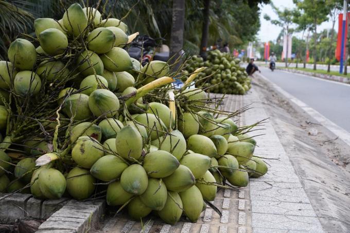 Người dân tại Bình Hòa, Giồng Trôm đốn dừa tập kết dọc đường chờ thương lái mua. Ảnh: Hoàng Nam