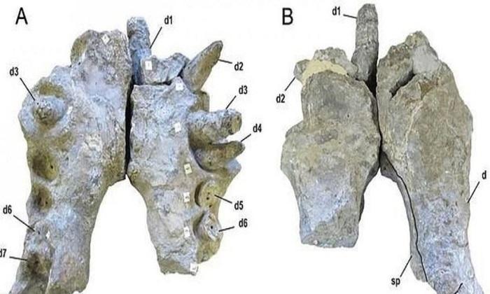 Cá sấu cổ đại khổng lồ có răng to bằng quả chuối