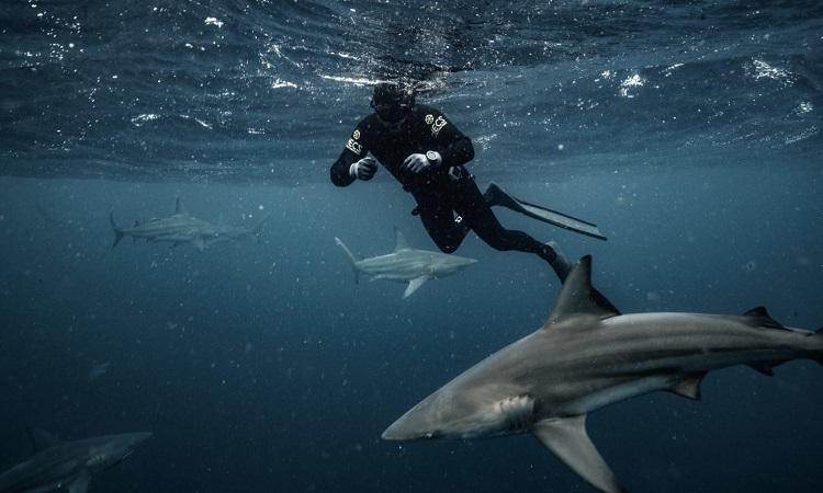 Cá mập hiếm tái xuất hiện sau 120 năm