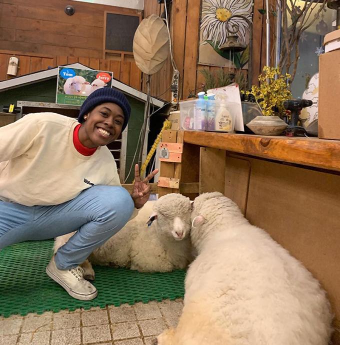 Cừu lột xác ngoạn mục sau khi tắm - 12