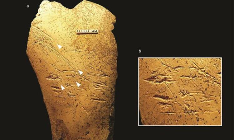 Công cụ 500.000 năm tuổi bằng xương ngựa