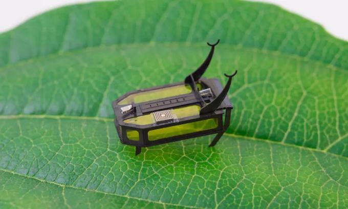 Robot RoBeetle lấy cảm hứng từ một loài bọ cánh cứng. Ảnh: AFP.