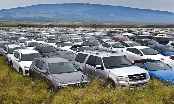 Hàng nghìn ô tô cho thuê bỏ hoang ở đảo Maui, bang Hawaii vì không có khách. Ảnh: Maui News